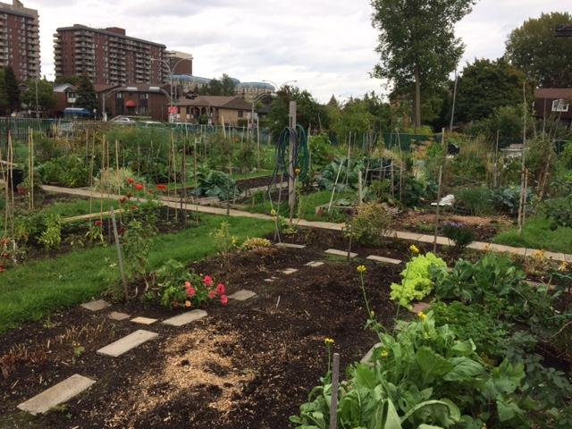 Côte Saint-Luc Seniors Community Garden